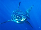 SHARK WEEK 2012: DISCOVERY CHANNEL - 25 YRS