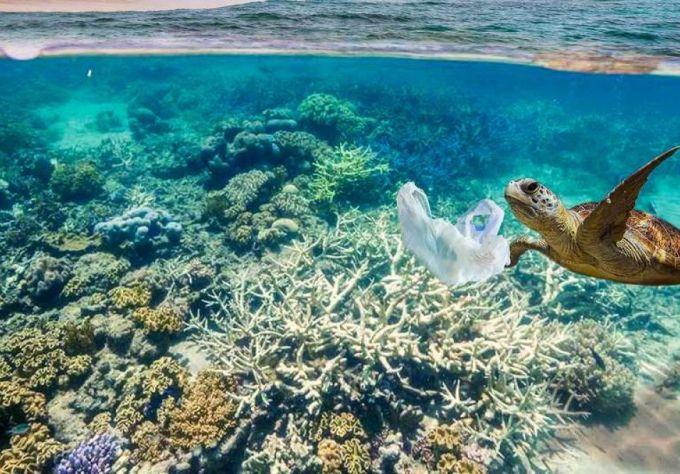 Ove morske životinje mogle bi spasiti planetu
